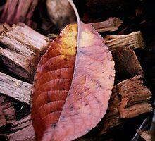 Autumn by Kylie Reid