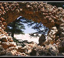 Cedars of Lebanon by Georgi Bitar