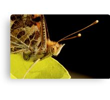 Butterfly Eyes Canvas Print