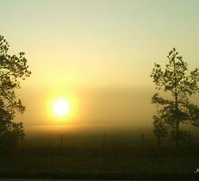 Sun Rising by Judy Gayle Waller