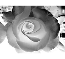 Pearl Rose Photographic Print