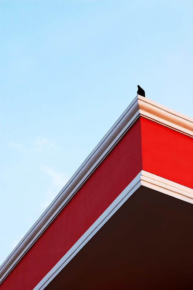 Black Bird by Claudio Cologni