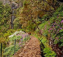 Levada Walk by Roger Green