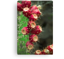 Southwestern Series Canvas Print