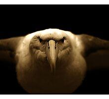 Albatross by Aaron .
