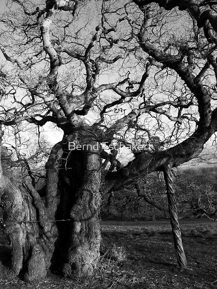 Tree by Bernd Tschakert