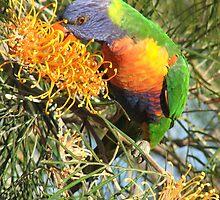 Beautiful birds by BecW