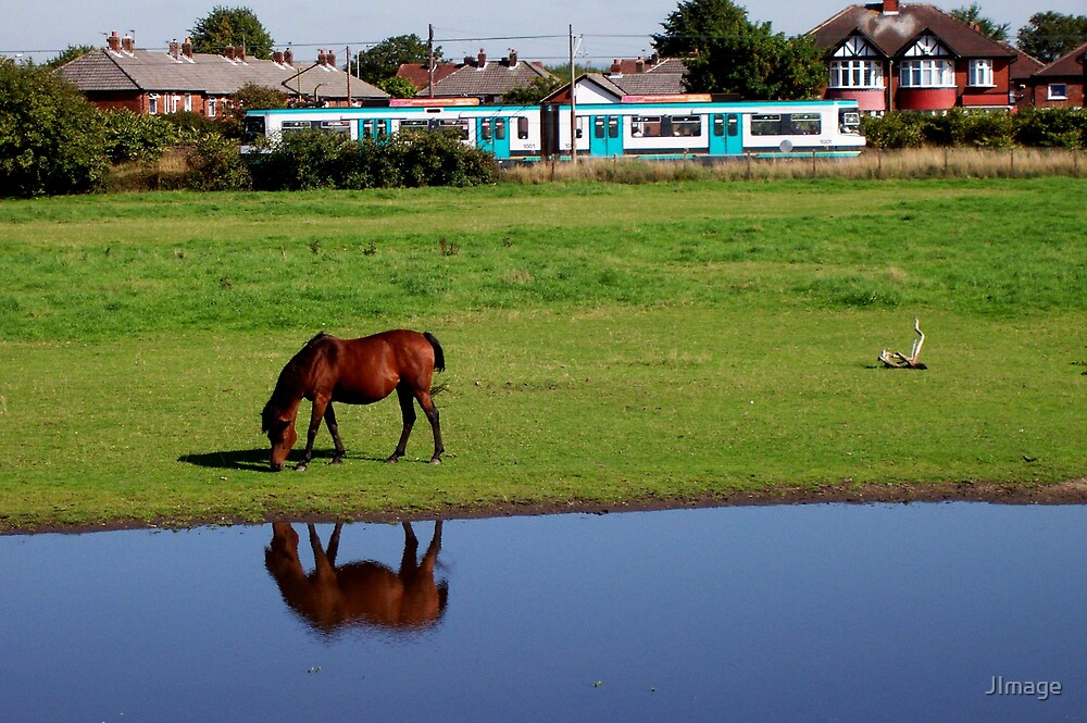 Grazing Horse and Metrolink by JImage
