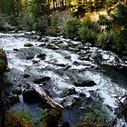 Rogue River by debidabble