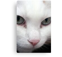 Green Eyed Stare Canvas Print