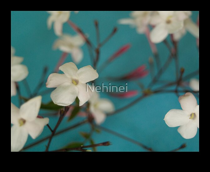 Blossom by Nehinei