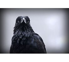 Crow protector Photographic Print