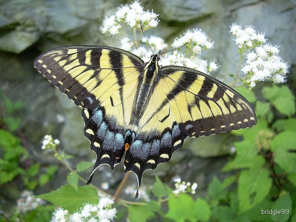 Butterfly by bridgie99
