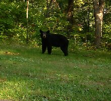 Black bear by bridgie99