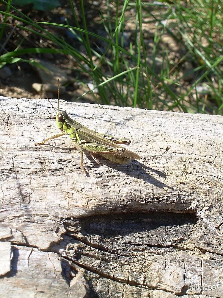 Grasshopper by bridgie99