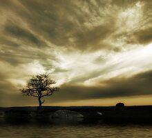 Tree Solitude by Samantha Cole-Surjan