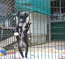 Puppy in Animal Refuge by bonnieblueyes