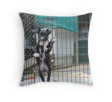 Puppy in Animal Refuge Throw Pillow