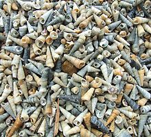 All  the shells on the beach by Paul Martin