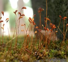 Moss by Shara