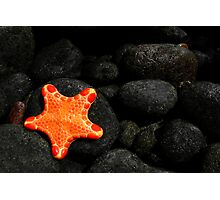 Star of the Sea Photographic Print