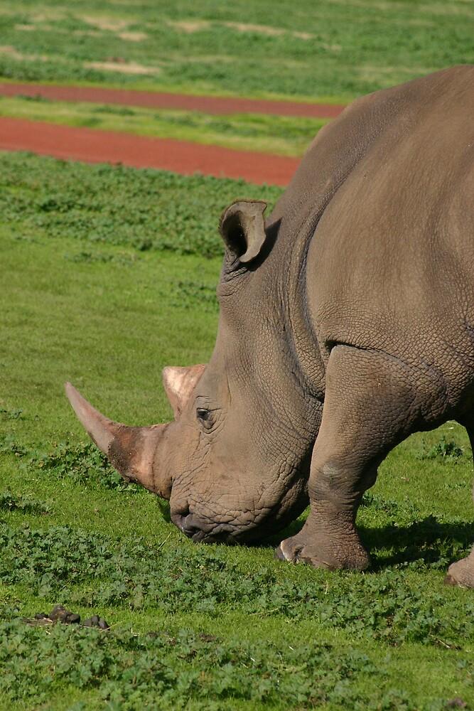 Rhino by Dannii Cockerell