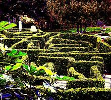 Labyrinth by honey
