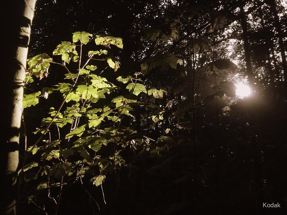 Forest Glow by Kodak