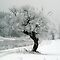 Winter/ Snow