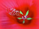 Knowing The Red Hibiscus by MotherNature