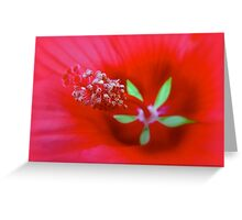 Knowing The Red Hibiscus Greeting Card