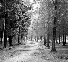 Forest Of Black And White by Joe Freemantle