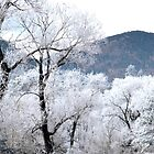 Panoramic Winter by Danny Key