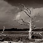 dead tree landscape by Dominic Parkes
