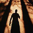 Redwood by Christopher Barker
