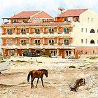 boavista Horse by oreundici