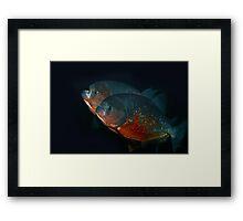 Piranha Brothers Framed Print
