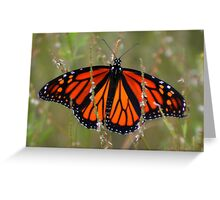 Free Colors. Greeting Card