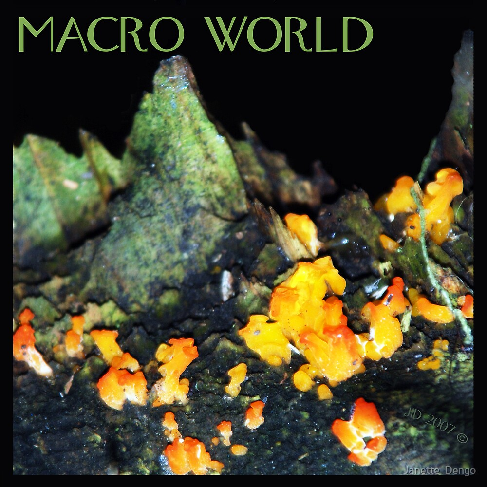 MACRO WORLD by Janette  Dengo