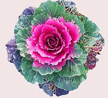 Ornamental Kale by LindaLou1952