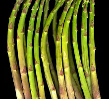 asparagus by Jeffrey  Sinnock