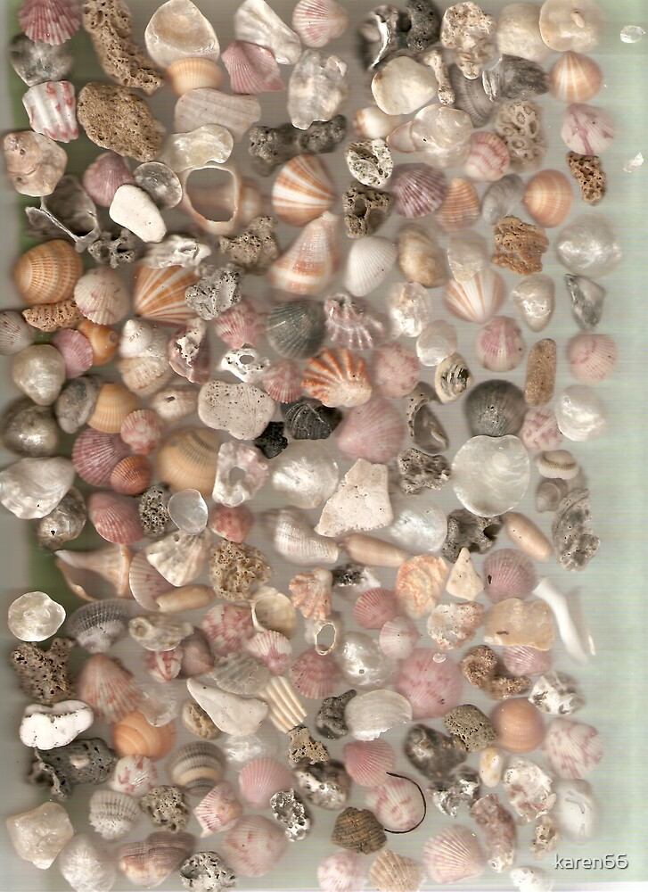 Baby Shell Collage by karen66