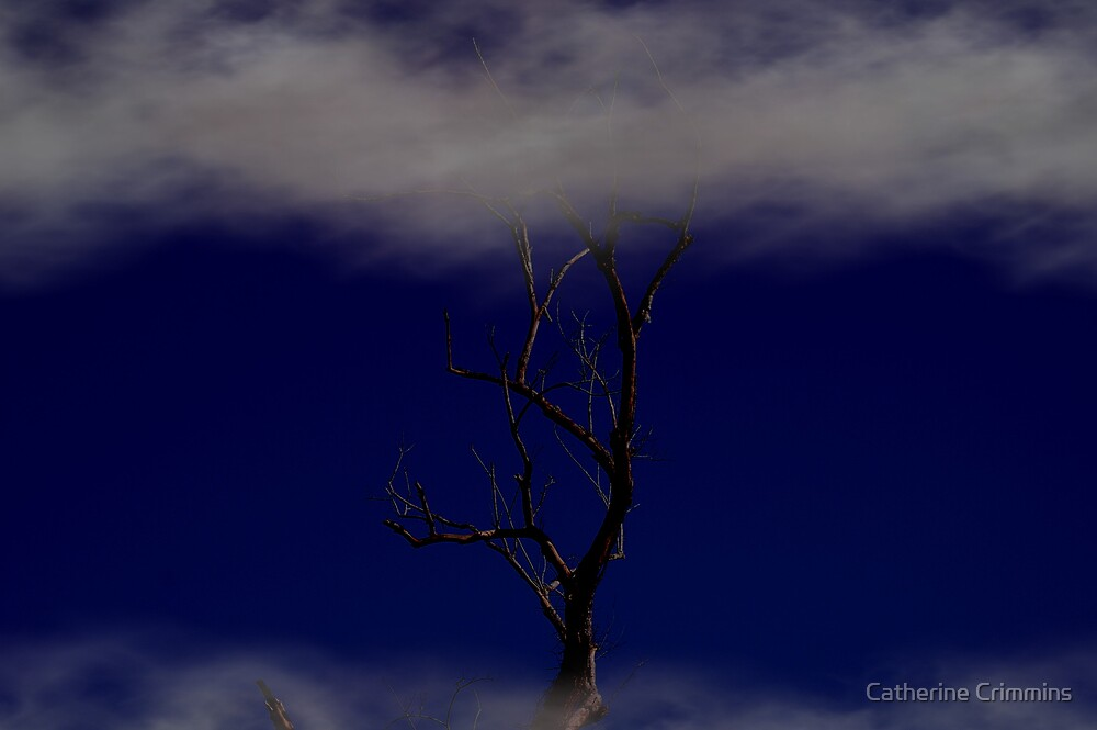 in the night by Catherine Crimmins