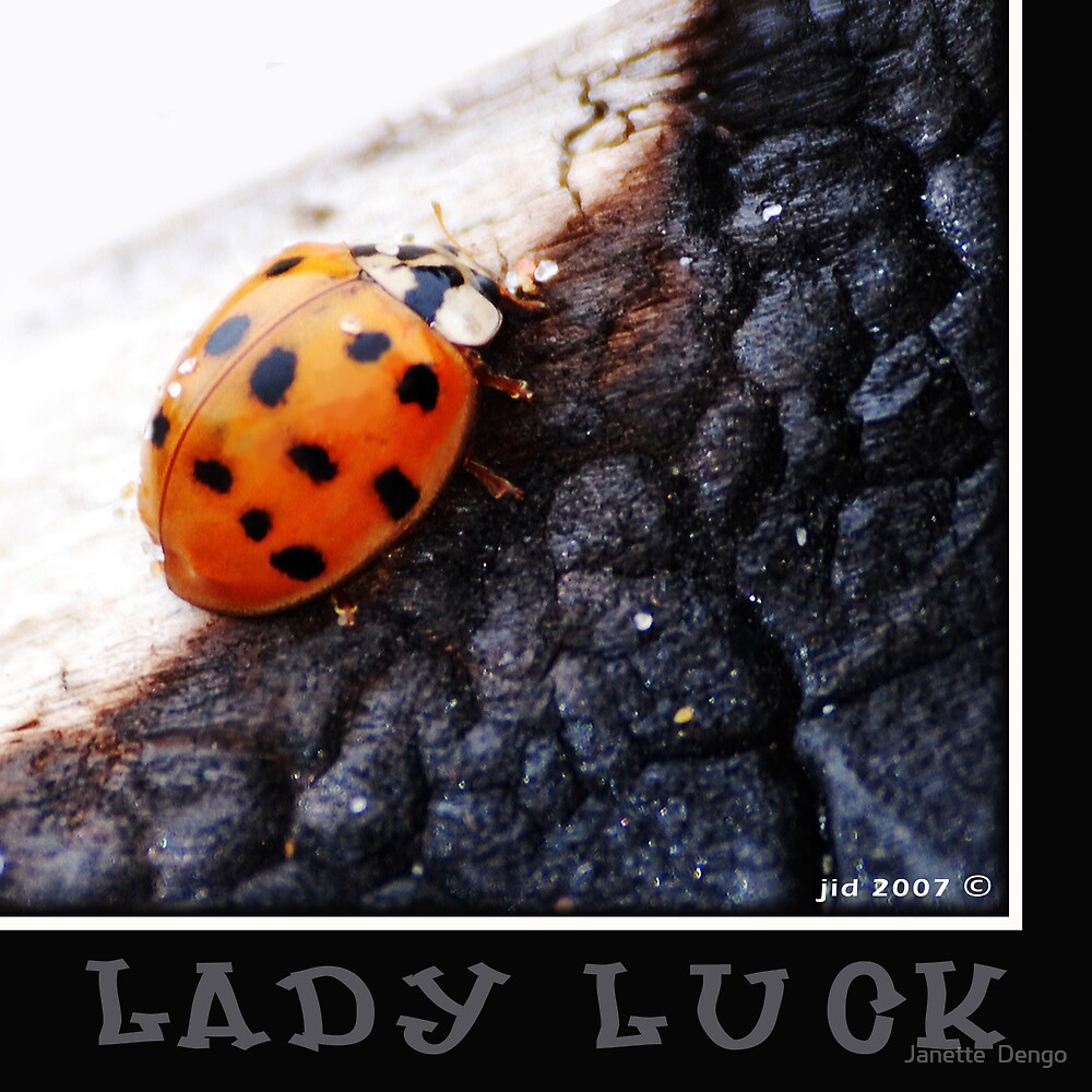 LADY LUCK by Janette  Dengo