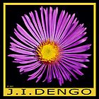 PURPLE DAISY by Janette  Dengo