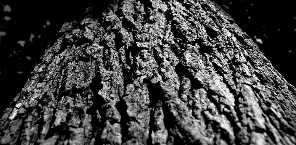 Tree Trunk by David Elliott