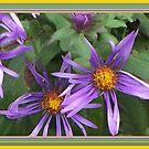 Pretty in Purple by Starr1949