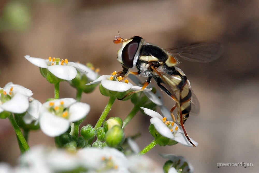 Hover Fly by greencardigan
