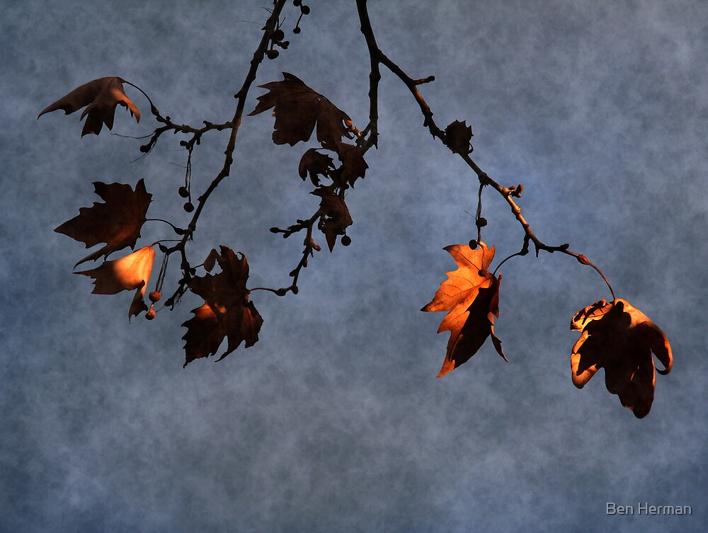Leaves and Sky by Ben Herman