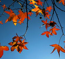 Leaves and Light by Lance Leopold